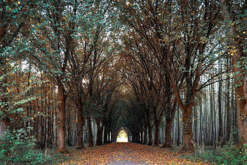Forêt d'automne sur Miranda van Hulst