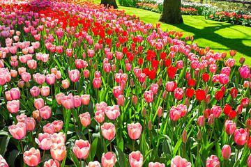 Bloemenveld in park met rode en roze tulpen van Ben Schonewille