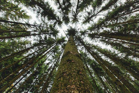Landschap in de verte | Bomen en bos