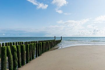 Zeekrib, golfbreker in Zoutelande van Patrick Verhoef