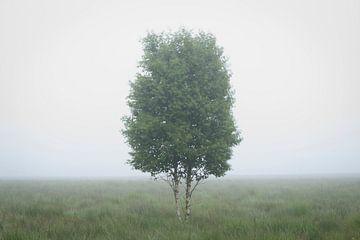 Eenzame berk van Michel Lucas