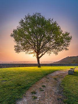 lonely tree van Ali Ehteshamy
