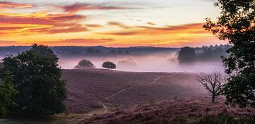 Morgenröte auf der Weide von Lars van de Goor