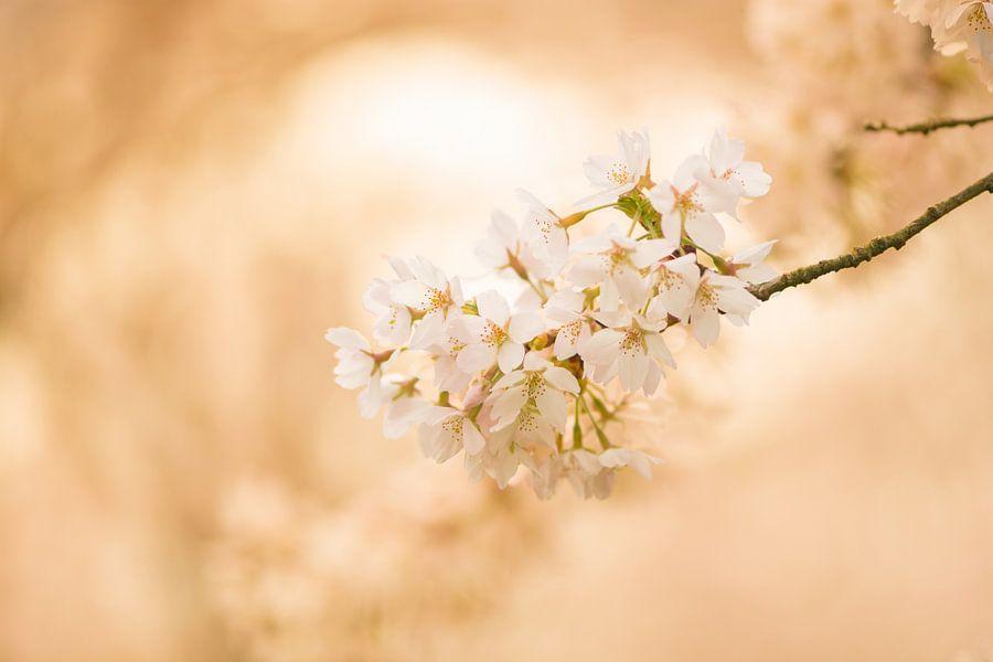 Golden blossoms van Ferry veldhuizen