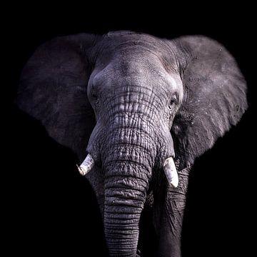 Portrait d'éléphant en noir sur