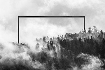 Wald mit Nebel am Morgen von Felix Brönnimann