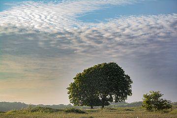 De Beroemde Bomen van Lieke Oppelaar