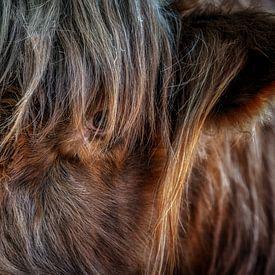 Highlander cattle von Reinier Snijders