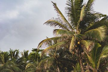 Palmbomen op het strand van Ronne Vinkx