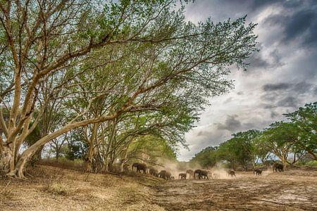Dry river crossing von Jack Soffers