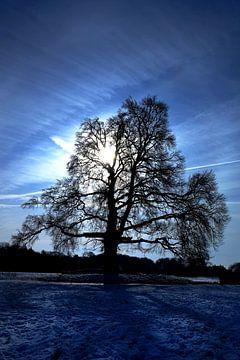 Bluesboom van Ton C Kroon