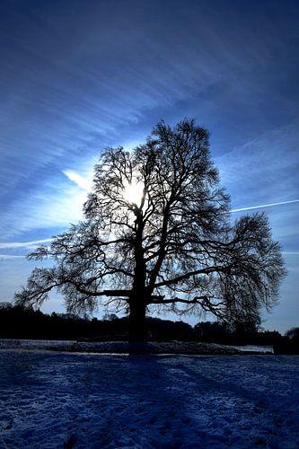 Bluesboom van