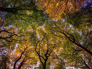 Kaapse Bos 2 van Henk Leijen