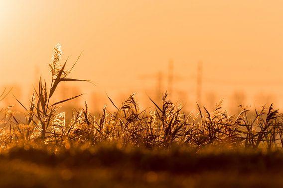 Grasslands van Nildo Scoop