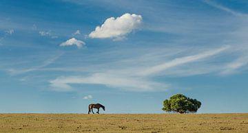 Op zoek naar groen gras van Sven Wildschut