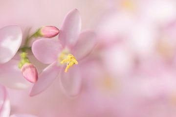 Duizend tinten roze van Antine van der Zijden