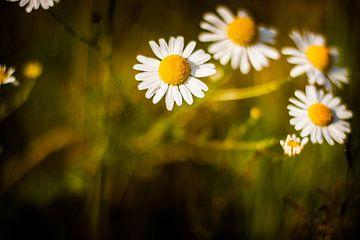 bloemen von Anne-Fleur Eggengoor