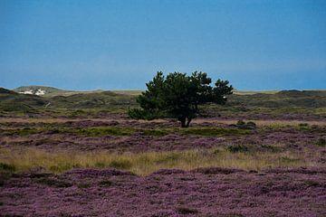 Natuurfoto Texel  van Jolien Luyten
