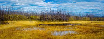Afgebrand bos, Stikine regio, Canada van Rietje Bulthuis