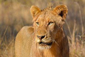 Lion portrait von Tim Sawyer