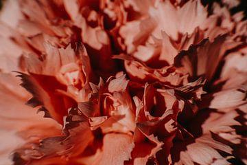 Blume von Desiree van den Burg