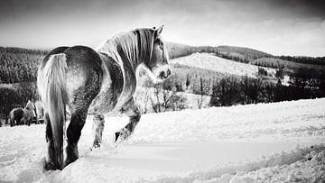 Paard in de sneeuw zwart-wit van Björn Jeurgens