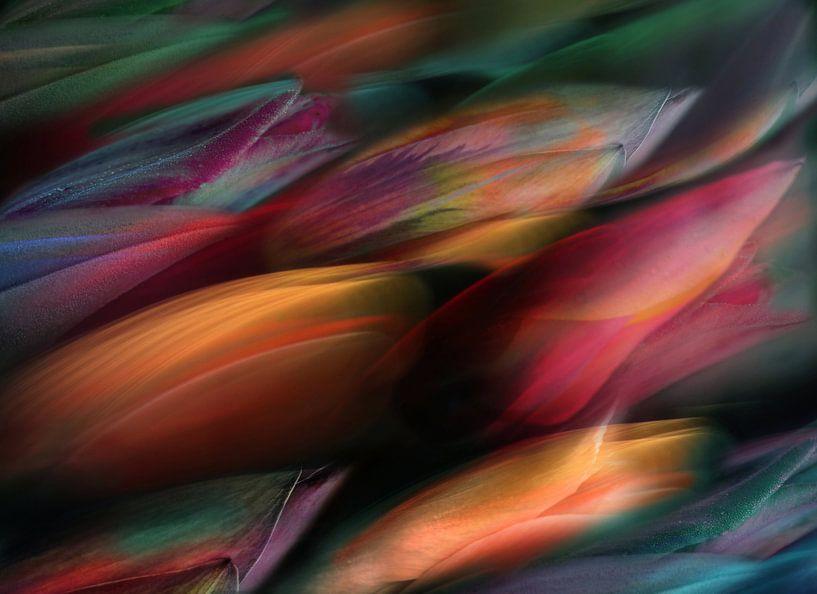 Tulp Flow van Jacky Gerritsen