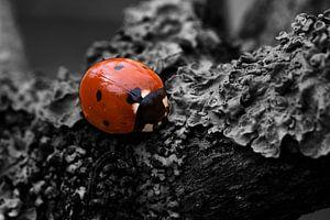 Ladybird colorkey van