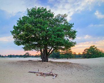 Lonely tree van Arjanne Gols