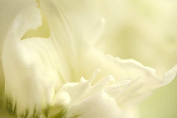 Detail van een witte tulp van Gonnie van de Schans