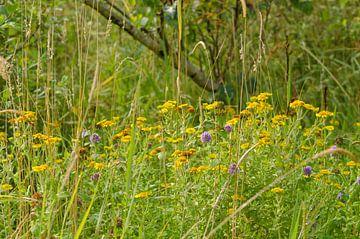 Wilde bloemen van Ans Bastiaanssen