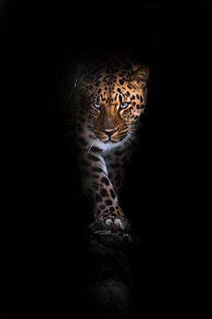 kijkt en loopt. luipaard geïsoleerd op een zwarte achtergrond. Wilde mooie grote kat in de nachtelij van Michael Semenov