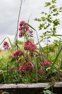 Wild rosa Blumen von Joyce Schouten
