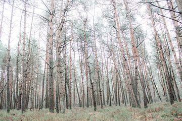 Den Wald vor lauter Bäumen nicht sehen (Teil 2) von Mascha Looije