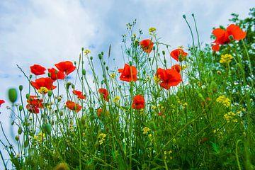 Blond Beeld ; Les fleurs van Blond Beeld