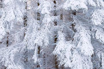 Winter in het bos II van Daniela Beyer