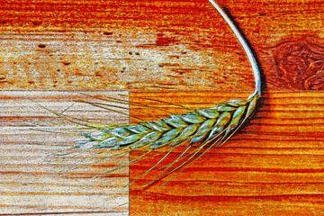 Korenaar op laminaatvloer van Frans Blok