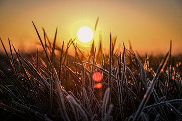 Bevroren gras van Florian Kampes