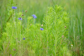 Wilde bloemen in het gras von Michel Knikker
