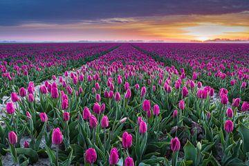 Ein Feld voller Farben von Rik Zwier