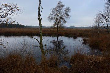 Pietzmoor Lüneburg Heide van Susanne Seidel
