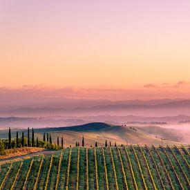 Vignoble en Toscane sur Tony Buijse
