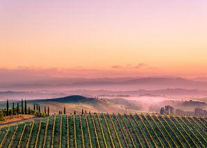 Wijngaard in Toscane van