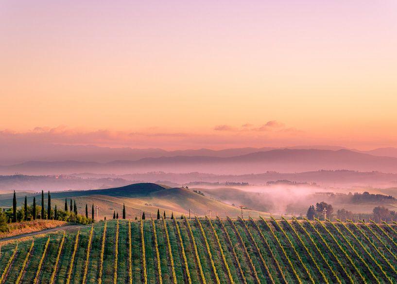 Wijngaard in Toscane van Tony Buijse