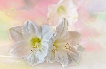 Weiße Amaryllis in Pastell von Ellen Driesse