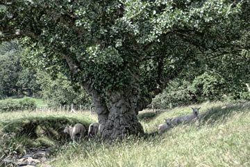 L'arbre magique avec les moutons sur Babette van den Berg