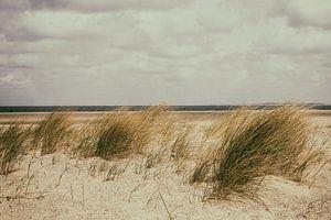 zeeland van