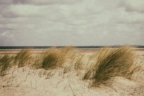 zeeland sur