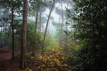 Landschap - Mistig bos von Angelique Brunas