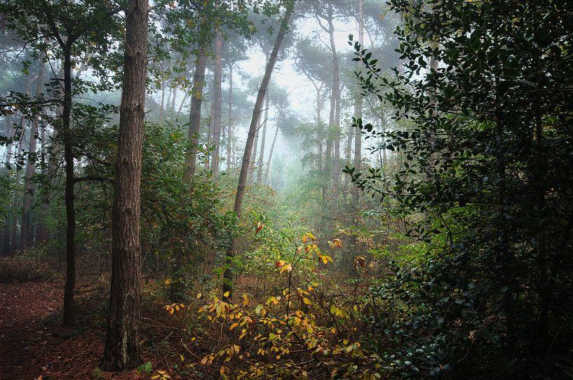 Landschap - Mistig bos van Angelique Brunas